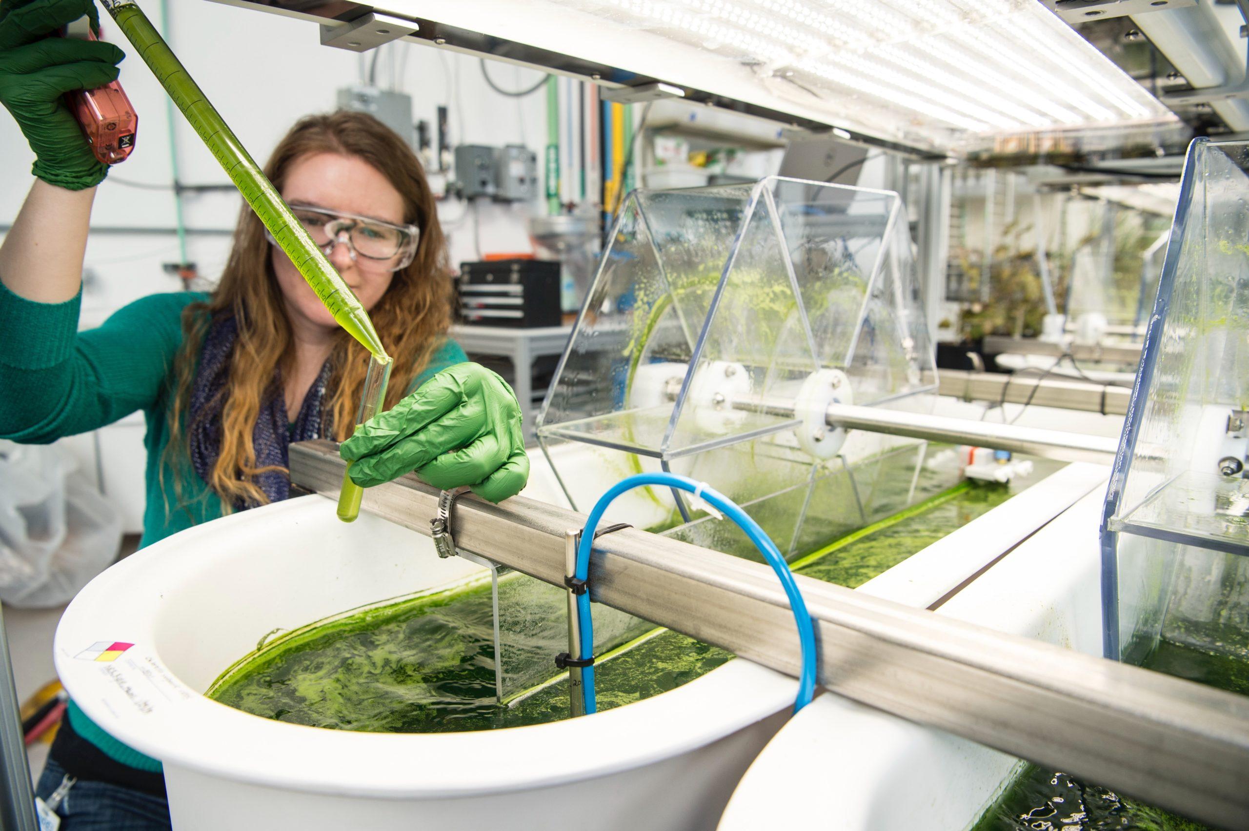 Les cyanobactéries font la presse…