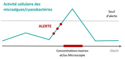 activité cellulaire des microalgues